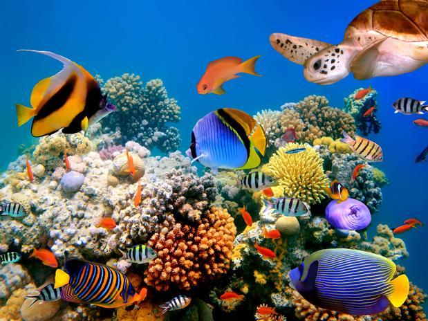 Evolución  en medios  acuáticos