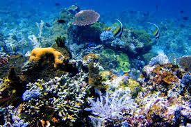 Protección de los ecosistemas acuáticos
