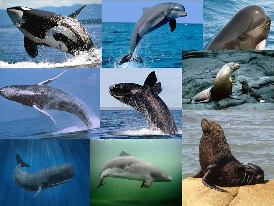 Extinción de las especies  acuáticas
