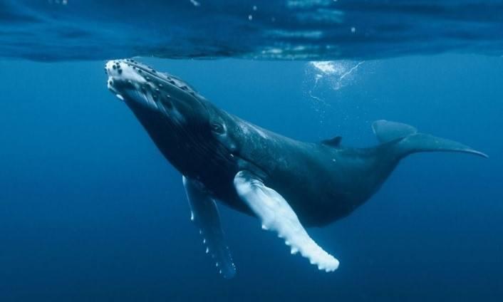 Las ballenas y su caza