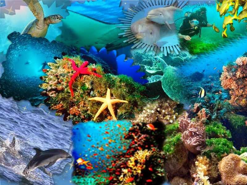 La importancia en la conservación de los ecosistemas acuáticos