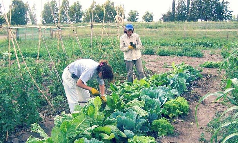 Denuncian vaciamiento del programa Cambio Rural