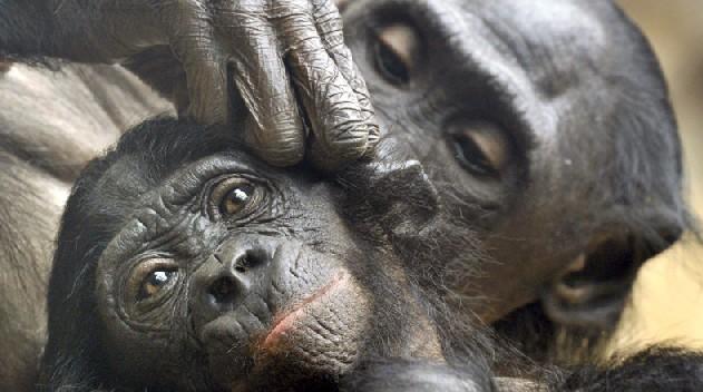 15 animales en peligro de extinción en 2017