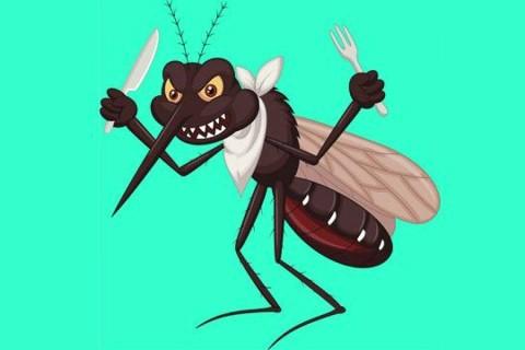 El calor y los mosquitos... Cómo evitar las picaduras?