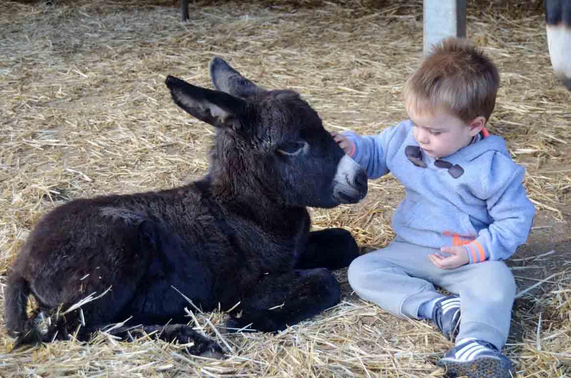 Un niño pequeño disfruta con un burro en Burrolandia