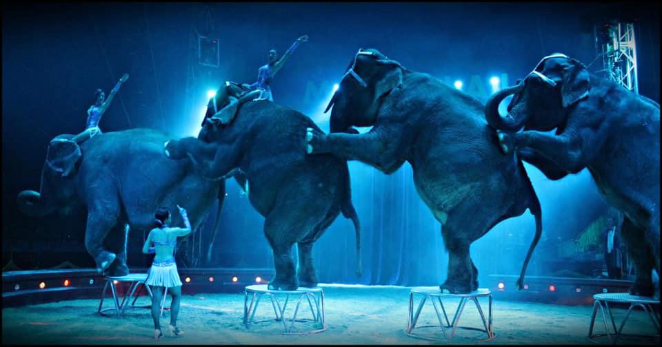 El Circo Quirós mantiene el circo con animales