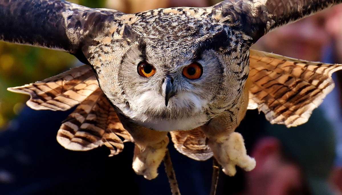 Cientos de aves protegidas están muriendo en los tendidos eléctricos en España