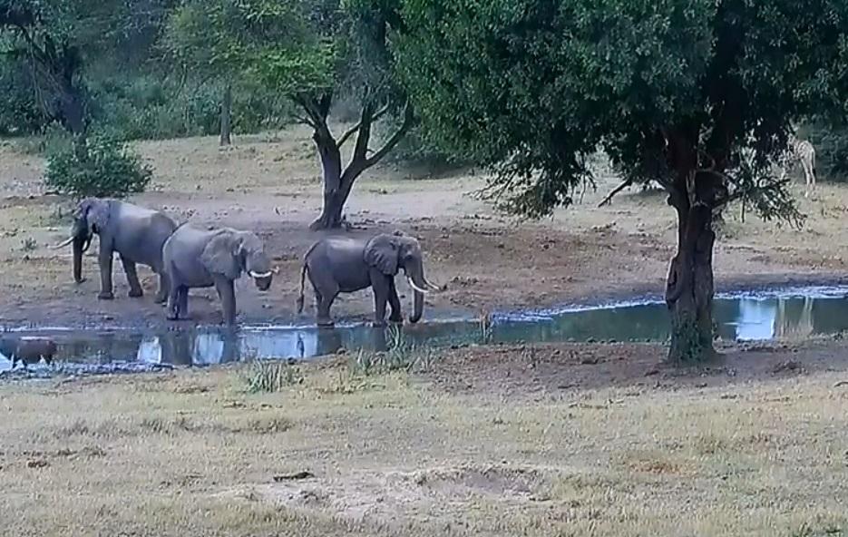 Tembe Elephant Park