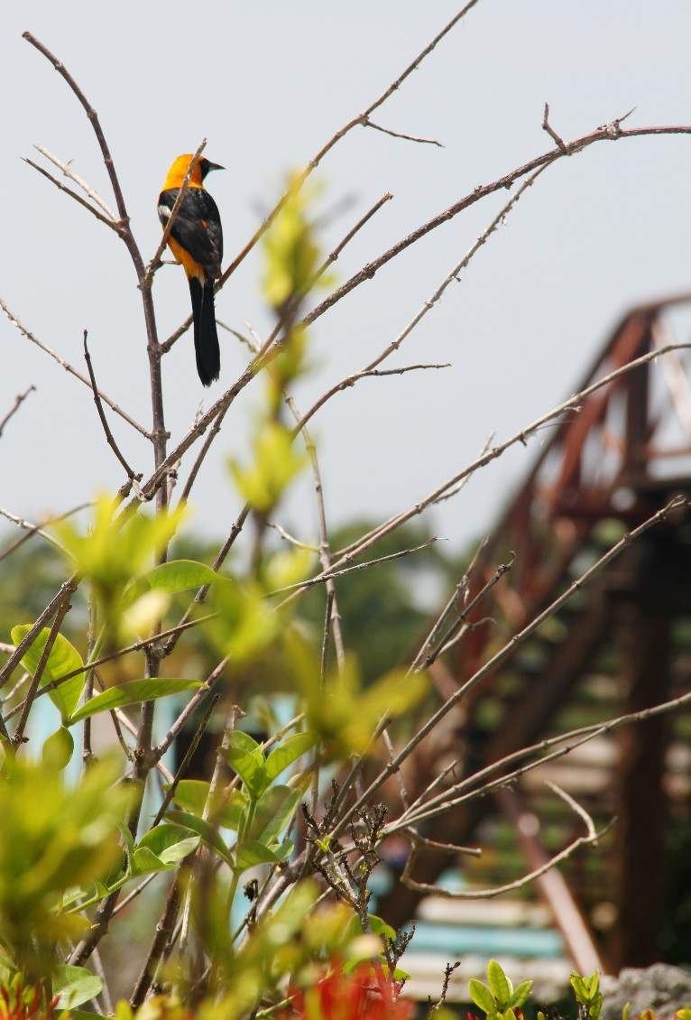 Aves tropicales en Riviera Maya