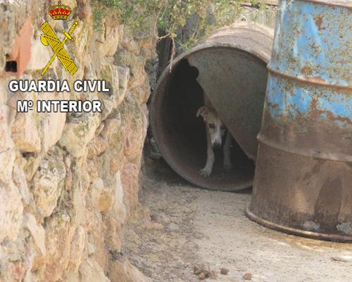 Hallan 55 perros en deplorables condiciones en una explotación de Guadalajara