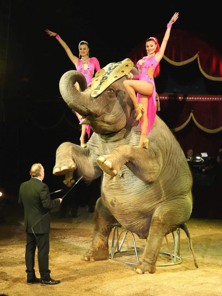Elefante sentado a dos patas en el circo Quirós