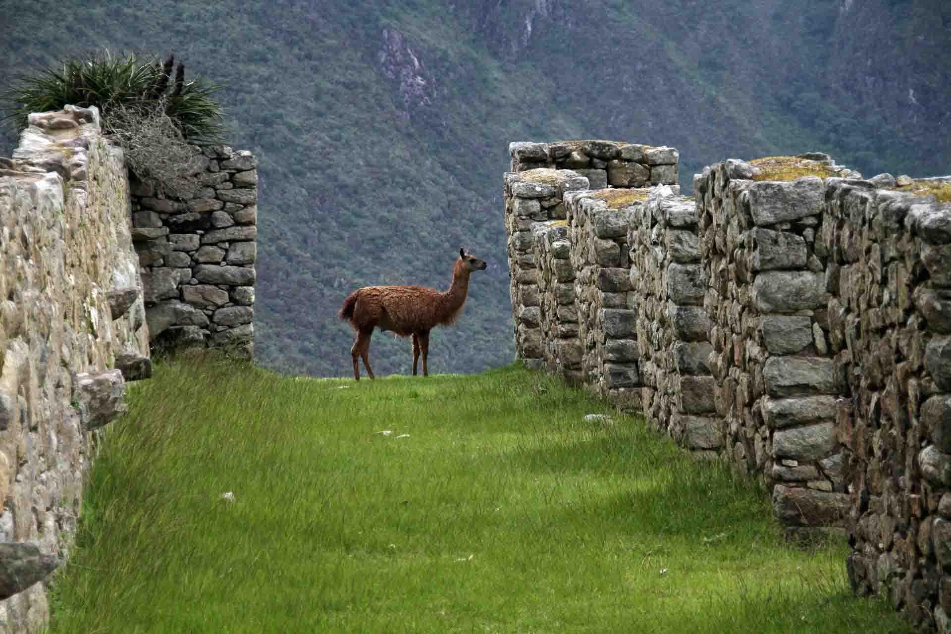 Perú, en directo vía webcam