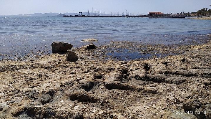 LOS ALCAZARES, MONTAÑAS DE ARENA QUE EXTIENDEN CON MAQUINARIA PESADA Y ZONAS DE ALGAS EN DESCOMPOSICION