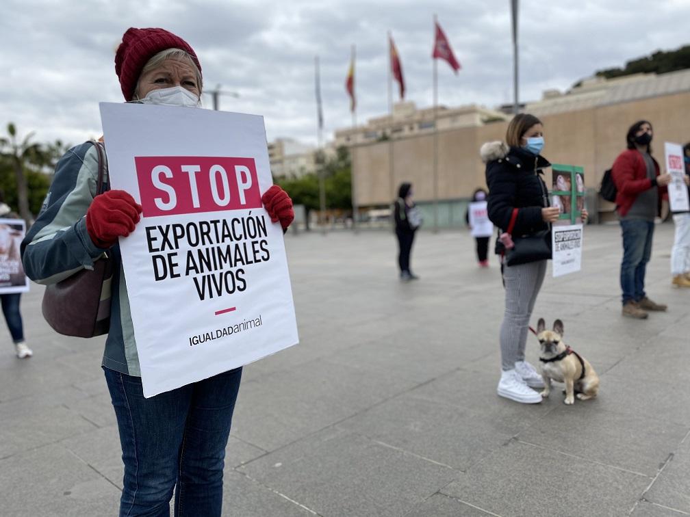 Igualdad Animal protesta en Cartagena para reclamar al Gobierno que prohiba la exportacion de animales vivos