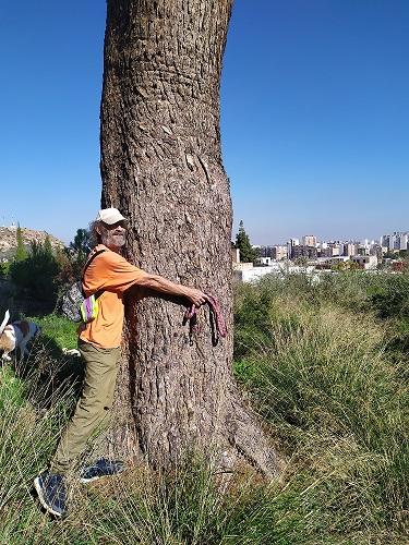 El Ayuntamiento de Murcia firmó la estrategia de adaptación al Cambio Climático, sin embargo quiere plantar toldos en lugar de árboles