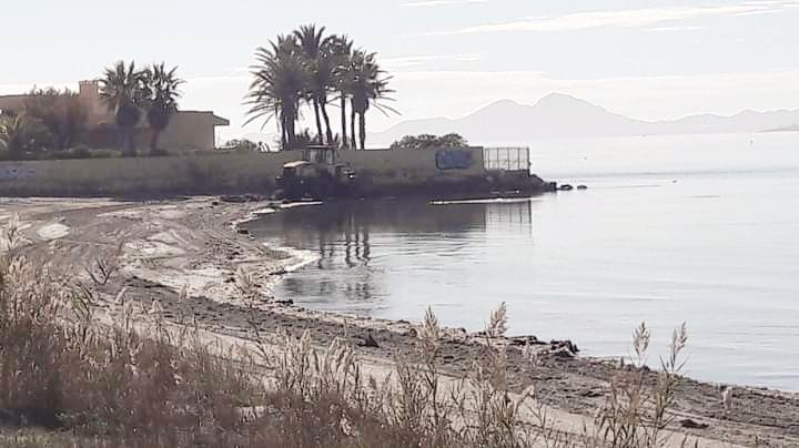 Denuncian la forma de limpiar de algas el Mar Menor incluso con maquinaria pesada en algunos puntos y nos preguntamos, ¿y el biólogo?