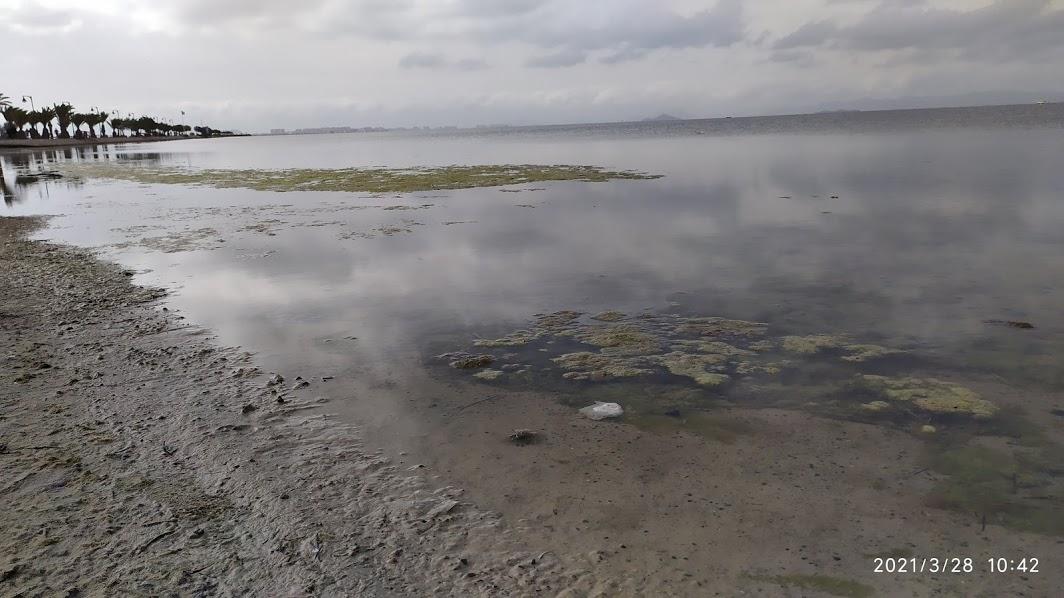 Playa de La Mota (Mar Menor), la putrefacción de las algas a flor de piel