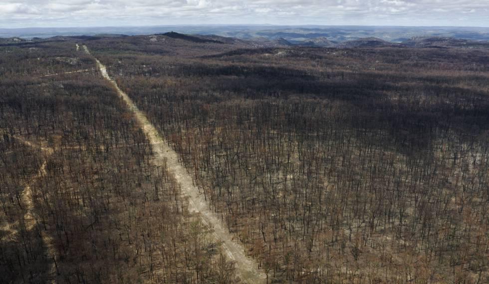 La lluvia da un respiro a Australia ante los incendios
