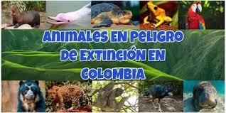 LOS ANIMALES AFECTADOS POR LA BASURA