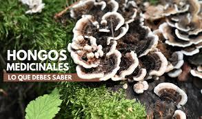 La importancia nutricional y medicinal de los hongos cultivados