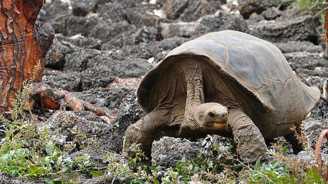 Animales sorprendentes de la región caribe