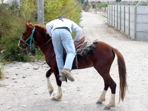 El caballo que habla