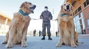Sonora, México, primer lugar de Latinoamérica en utilizar canes para detección de COVID-19.