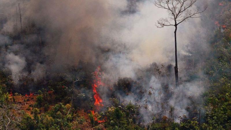 Incendios en el Amazonas: las imágenes erróneas sobre los fuegos que se están compartiendo en las redes sociales