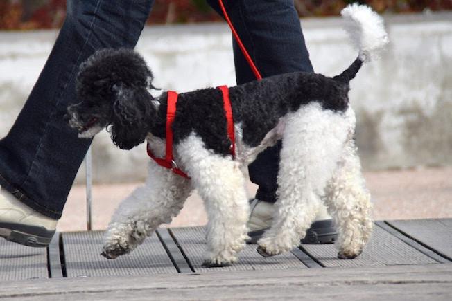 Reducir el tiempo de paseo de los perros y limpiarles las patas antes de entrar en casa