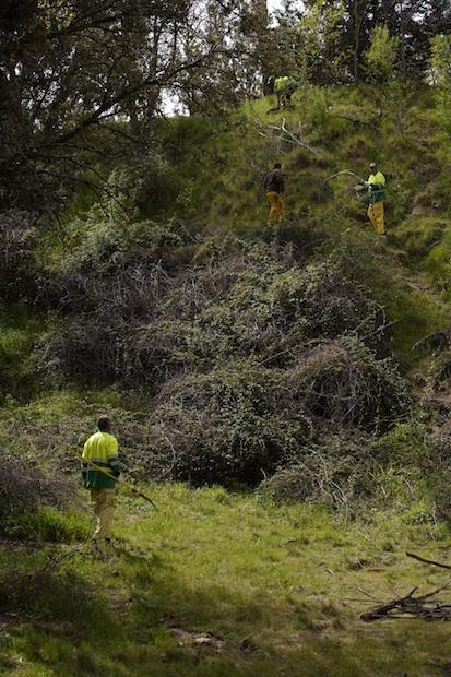 Las Rozas desbroza y limpia ocho de sus barrancos naturales