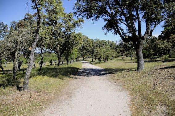 Desbrozadas más de 12 hectáreas del monte de Boadilla para prevenir incendios en verano