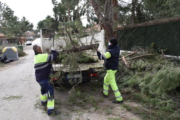 Un nuevo servicio trabajará mañana y tarde para retirar los restos de Filomena en Villaviciosa