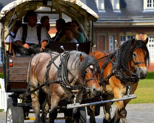 Coches de caballos: ¿oficio o maltrato animal?