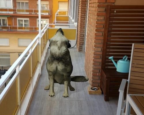 ¿Cómo puede haber un lobo en mi terraza?