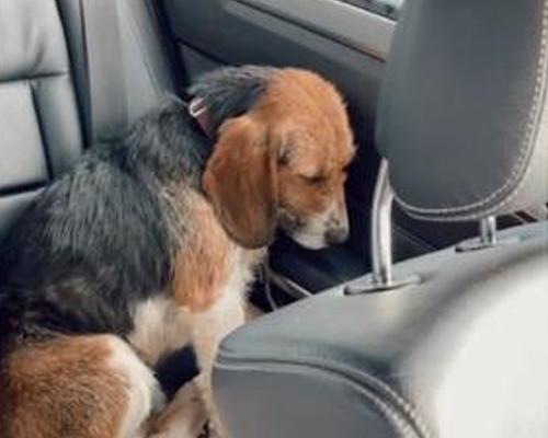 Del miedo al amor: el cambio espectacular de un perro adoptado