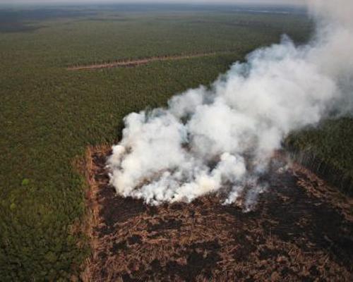Greenpeace acusa a una empresa de quemar selva virgen en Papúa