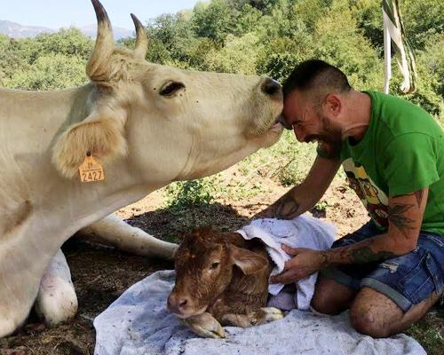 Santuario Gaia, el refugio de los animales de granja