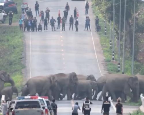 Una manada de elefantes cruza una carretera en Tailandia