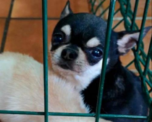Rescatados 270 perros mutilados en criaderos ilegales