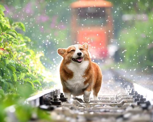 ¿Sabías que los perros nacen listos para comunicarse con las personas?