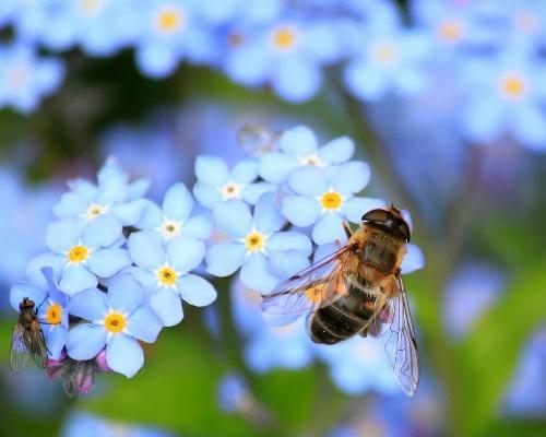 El 40% de los insectos polinizadores están en peligro de extinción