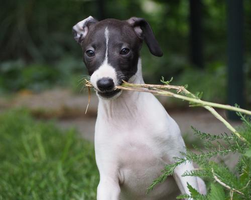 Miles de personas contra el maltrato de perros de caza