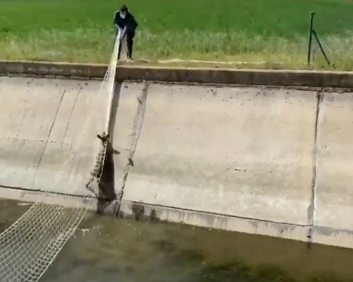 Emotivo rescate de un corzo en la provincia de León