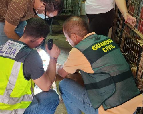 Hallan 37 perros robados enjaulados y en estado de abandono en Sevilla