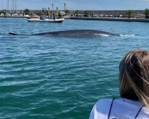 Devuelven a mar abierto a una ballena rorcual atrapada en Valencia