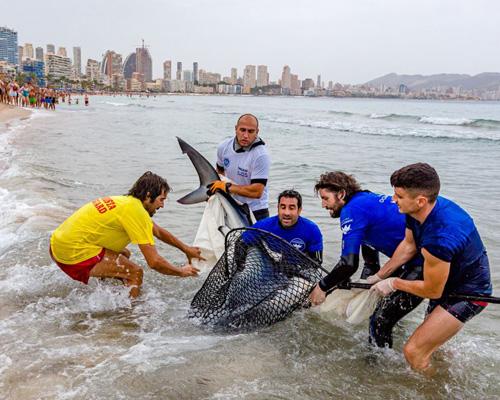 Un tiburón obliga a desalojar una playa de Benidorm