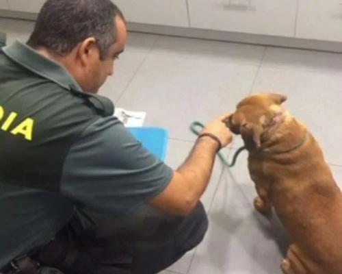 Rescatan a una mujer que intentó salvar a un perro
