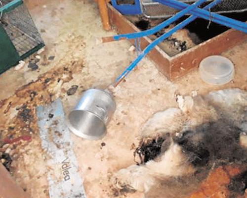 Condenada por abandonar a 14 perros que murieron de inanición