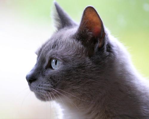¿Cuáles son las curiosidades más sorprendentes de los gatos?