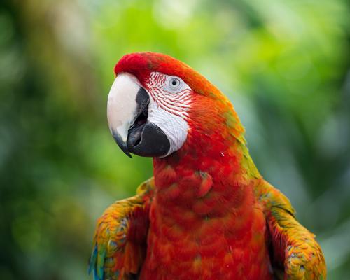 ¿Qué enfermedades pueden contagiarnos los animales exóticos en casa?